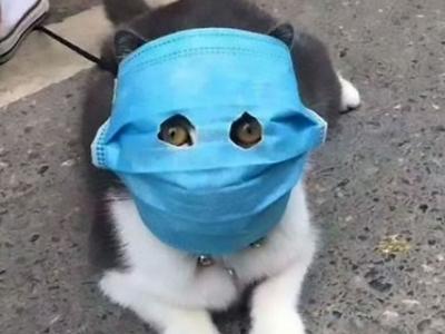 covid-19 передается через кошек