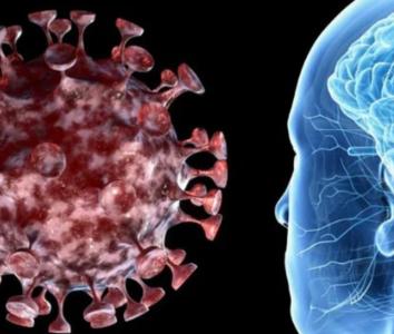 Может ли Covid-19 поразить мозг?