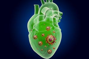 поражение сердца при коронавирусе