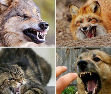 Бешенство это инфекция, передаваемая животными